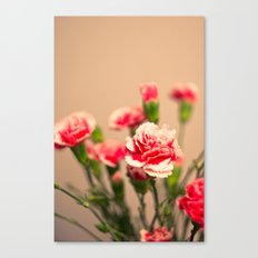 Carnation II Canvas Print