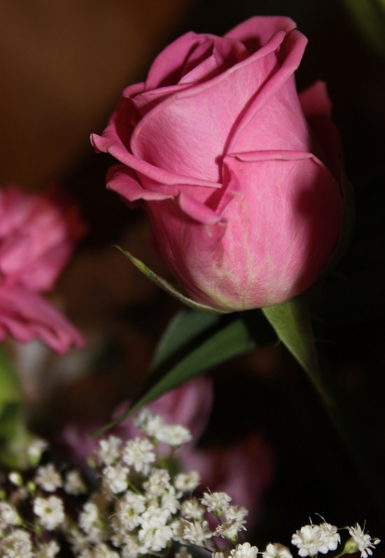Beautiful Rose. Art Print