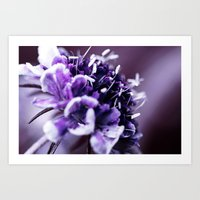 Purple Scabious Macro Art Print
