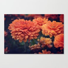 Sweet Orange  Canvas Print