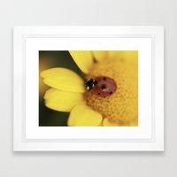 Ladybug on yellow flower - macro still life - fine art photo for interior decor Framed Art Print