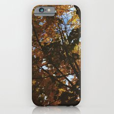 Autumn Shine iPhone 6s Slim Case
