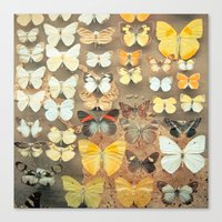The Butterfly Collection… Canvas Print