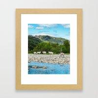 Newfoundland Caribou Framed Art Print