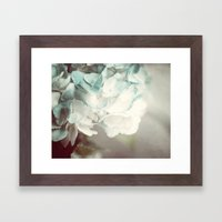Soft Teal Hydrangea  Framed Art Print