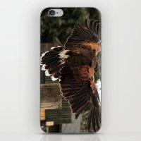 Red Tailed Hawk iPhone & iPod Skin