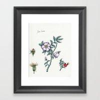 Plants & Herbs Edition Framed Art Print