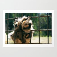Lion Claw Art Print