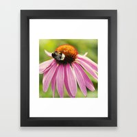 Bee Love Framed Art Print