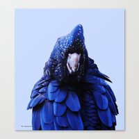 Red Tailed Cockatoo Canvas Print