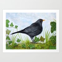 The Blackbird Art Print