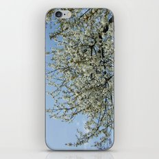 Relax iPhone & iPod Skin