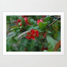 dear japanese rose 2 Art Print