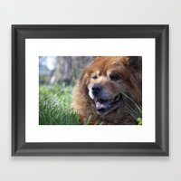 Yogi, The Adorable Chow … Framed Art Print