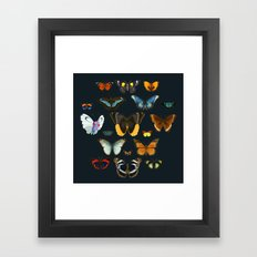Entomology Vintage Butterfly Framed Art Print