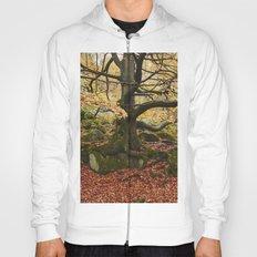 Autumnal woodland. Padley Gorge, Derbyshire, UK. Hoody