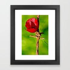 rose tulip Framed Art Print
