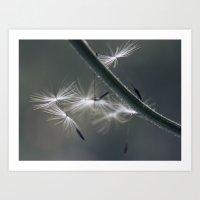 fly away - dandelion seed Art Print