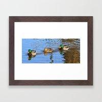 Ducks in a Row Framed Art Print