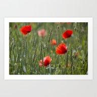 Art Print featuring Poppy Flowers by LebensART Photograph…