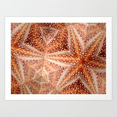 Urchin Mosaic Art Print