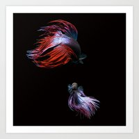 Betta No.2 Art Print