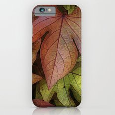 leaves at rest iPhone 6 Slim Case