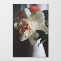 Pink Daffodil Canvas Print