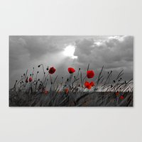 Only poppies... Canvas Print