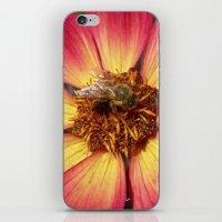 wild bee macro VIII iPhone & iPod Skin