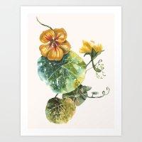 Nastursium, flower, flower paintings, garden lover gift Art Print