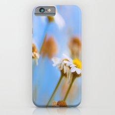 Daisies on Blue iPhone 6 Slim Case