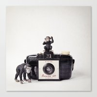 The Monkies And The Brow… Canvas Print