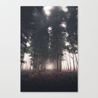 Forests Fog Canvas Print
