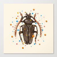 INSECT VIII Canvas Print