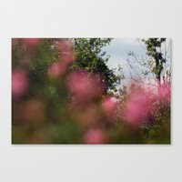 FOCUS IV Canvas Print