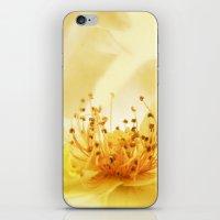 Golden Rose iPhone & iPod Skin