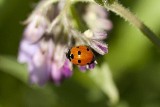 Ladybird in Spring Art Print