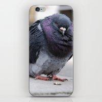 Mr Pigeon iPhone & iPod Skin