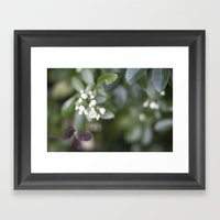 A New Framed Art Print