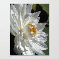 Lotus White Canvas Print