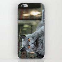 Diesel The Cat ! iPhone & iPod Skin