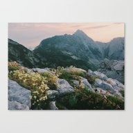 Mountain Flowers At Sunr… Canvas Print
