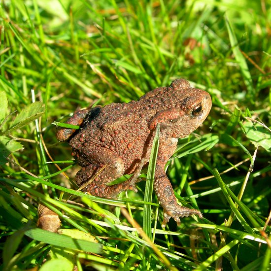 tree frog macro IV Art Print