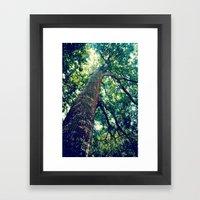 lookingup2 Framed Art Print