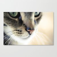 The Cat's Whiskers Canvas Print