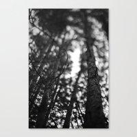 Through The Tree Line. Canvas Print