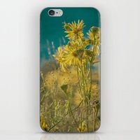 jaune d'or -- golden yellow summer wildflowers aglow in the sunshine iPhone & iPod Skin