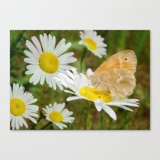 Butterfly :: Rings of Gold Canvas Print