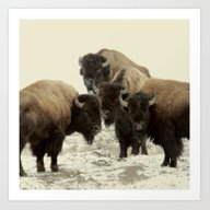 Art Print featuring American Buffalo by Color And Patterns